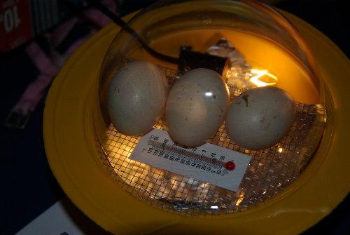 Animales Que Nacen Del Huevo